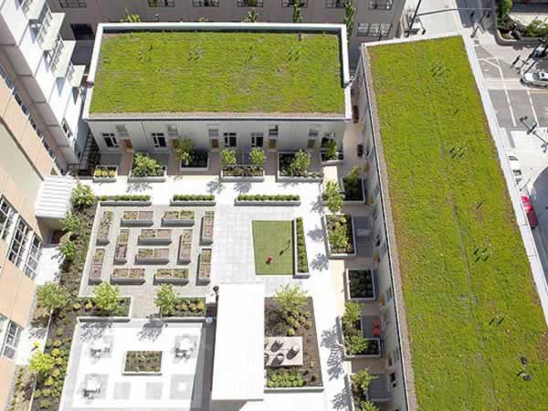 Sistema semi intensivo Greenroof